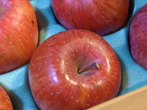 Apple 2010-01.jpg