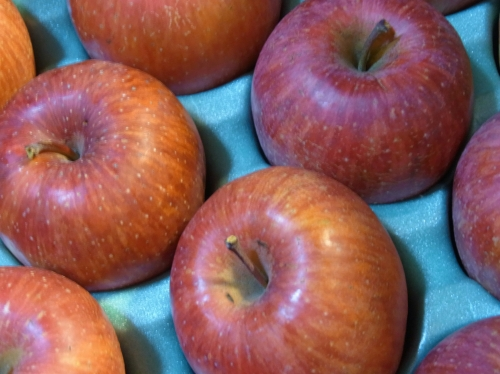 Apple 2010-02.jpg