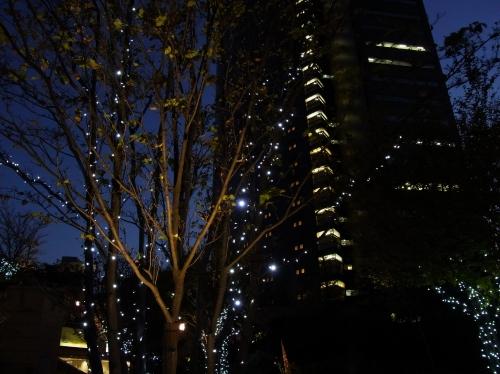 曽根麻矢子2010_11_27-12.jpg