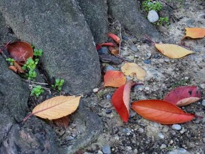 桜2010_12_01-02.jpg