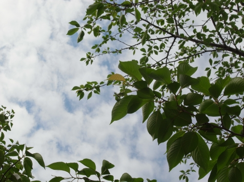 桜と空.jpg