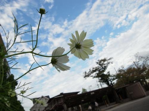 Flower 2010_10_29-02.jpg