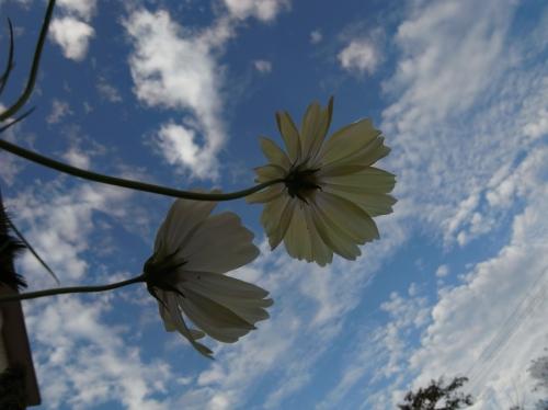 Flower 2010_10_29-03.jpg