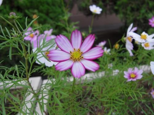 Flower 2010_10_29-04.jpg