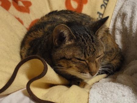 Nyanko 2010_04_22-01.jpg