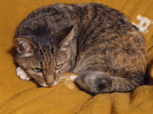 Nyanko 2010_05_06-1.jpg